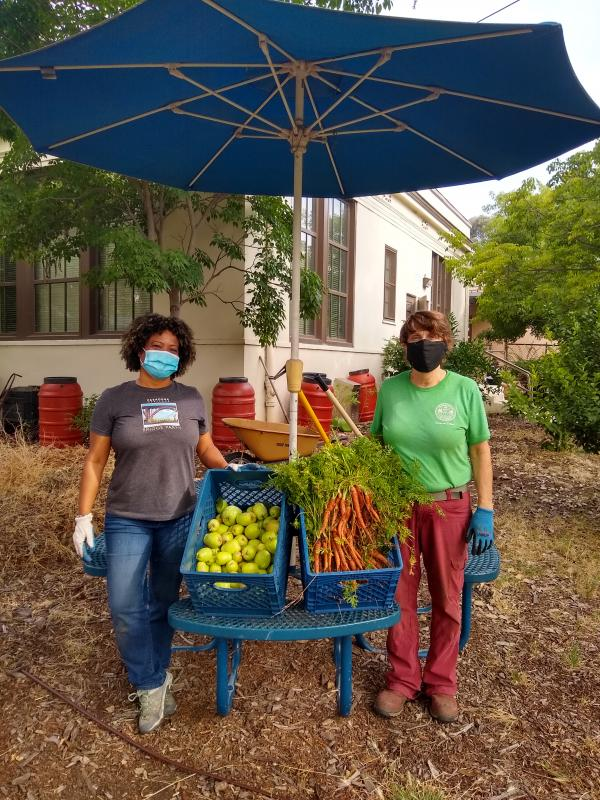Pasadena Educational Foundation volunteering with masks on handing out their garden vegetables.